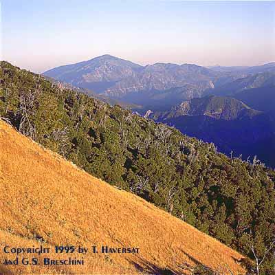 Junipero Serra Peak from the Pine Ridge Trail
