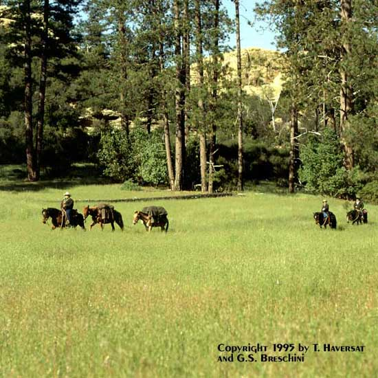 Packtrain Entering the Meadow in Pine Valley After a Day\'s Ride