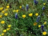 Wildflowers, Spring 1999