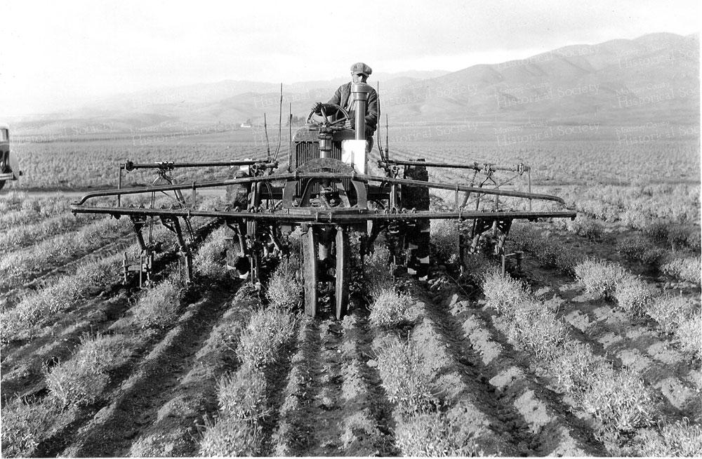 guayule-cultivator