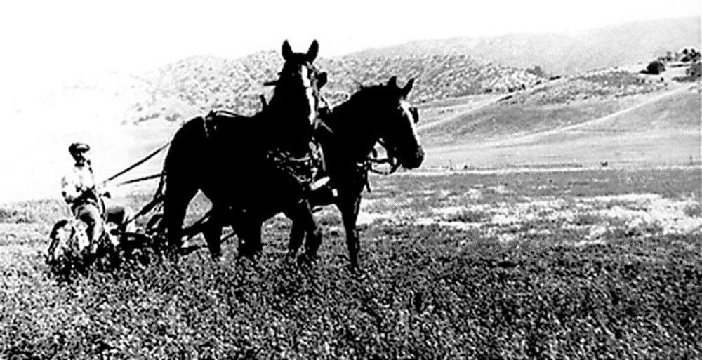 harvesting-cart_horses6d0d