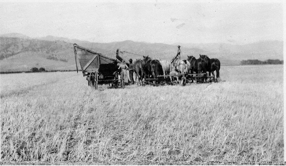 hsarvesting-wheat-field