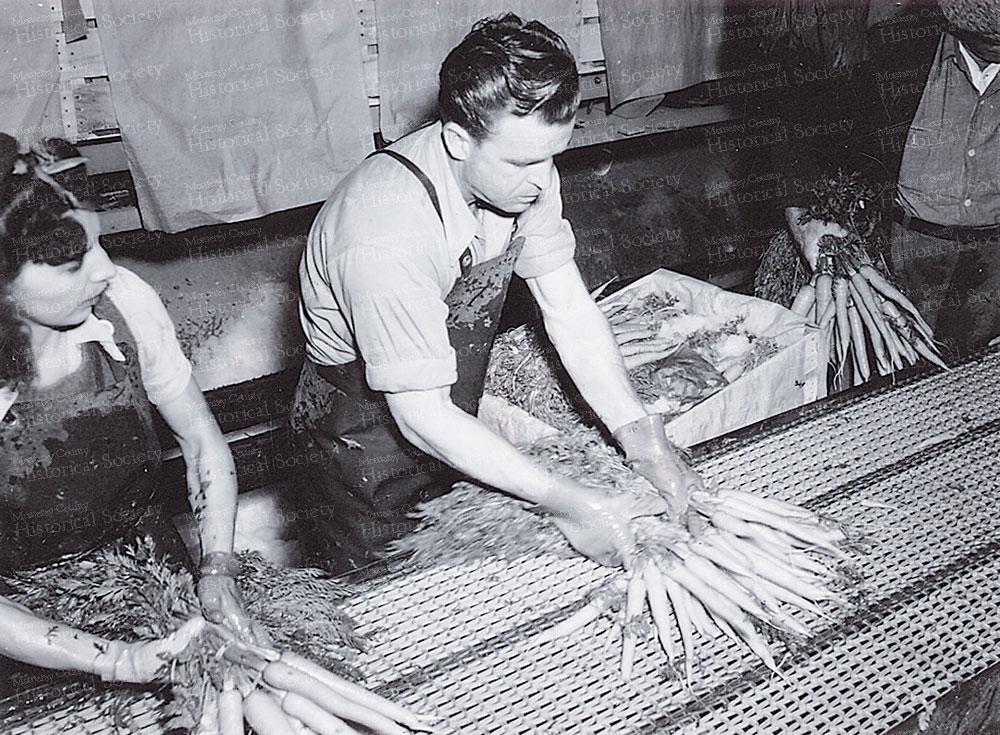 processing-carrots