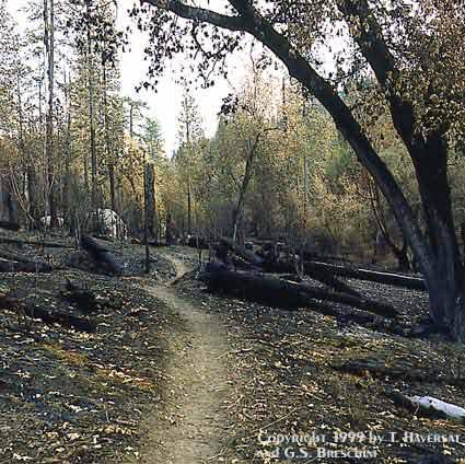 Trail Through Pine Valley, Ventana Wilderness, November 13-14, 1999.