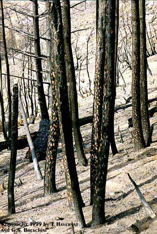 From the Pine Ridge Trail, Ventana Wilderness, November 13-14, 1999.