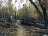 Trail Through Pine Valley, Ventana Wilderness, November 13-14, 1999.